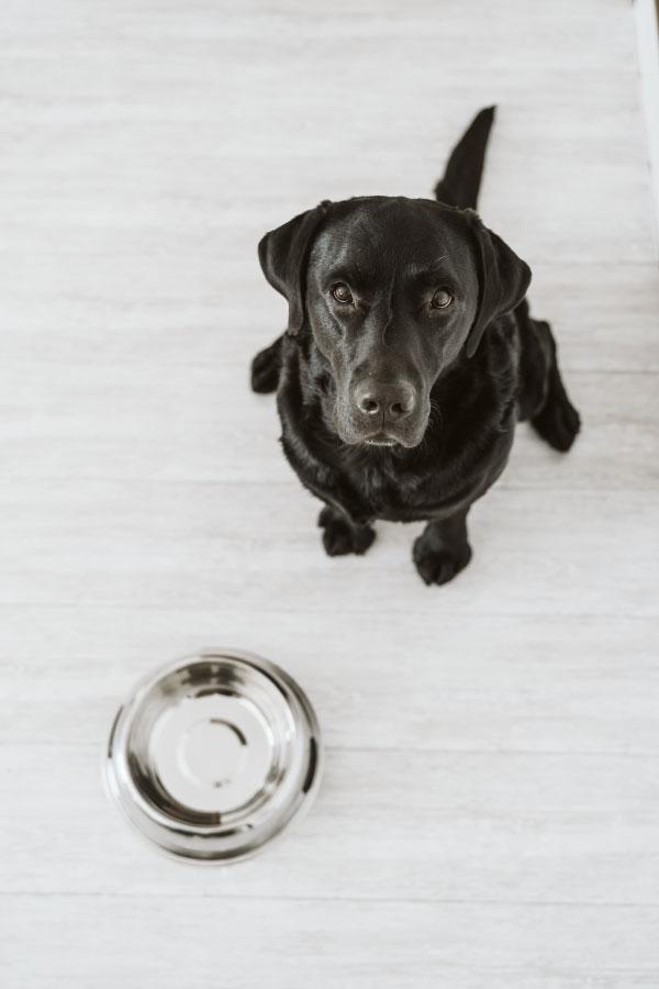 შინაური ცხოველების ნივთების დეზინფექცია