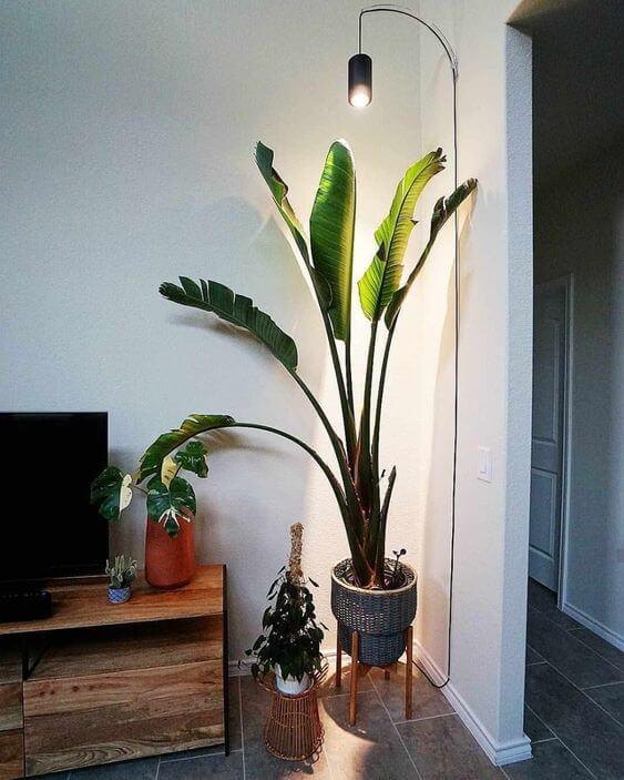 add light to plants