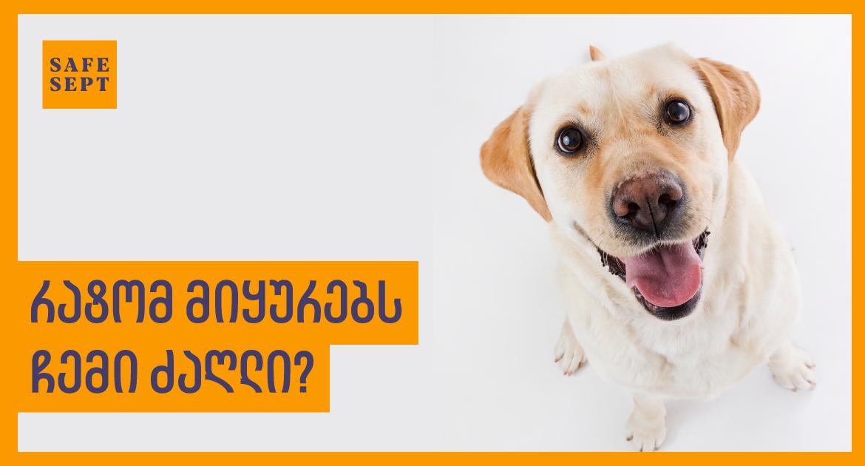 რატომ მიყურებს ჩემი ძაღლი? | SAFESEPT PETS