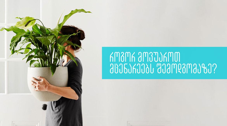 როგორ მოვუაროთ მცენარეებს შემოდგომაზე? | 5 რჩევა